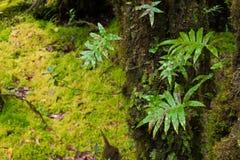 Предпосылка дождевого леса с зелеными мхами и папоротником Стоковые Изображения RF