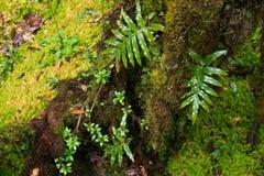 Предпосылка дождевого леса с зелеными мхами и папоротником Стоковое Изображение RF