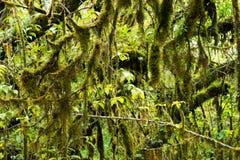 Предпосылка дождевого леса с зелеными мхами и папоротником Стоковое фото RF