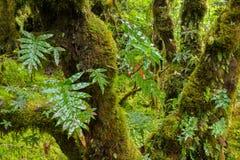 Предпосылка дождевого леса с зелеными мхами и папоротником Стоковые Фотографии RF