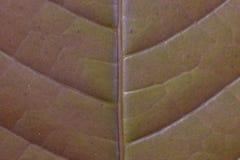 предпосылка доски текстуры лист patern стоковая фотография rf
