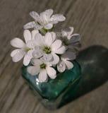 предпосылка древесины вазы конца-вверх белых цветков стеклянная Стоковое Фото
