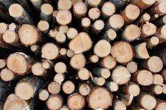 Предпосылка древесины в зиме Стоковая Фотография RF
