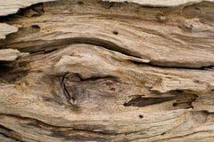 Предпосылка древесины Стоковое Изображение