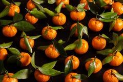 Предпосылка еды tangerines с листьями Мандарины лежат на деревянных досках покрашенных в черноте стоковые фотографии rf