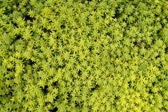 Предпосылка естественных зеленых растений Стоковые Изображения RF