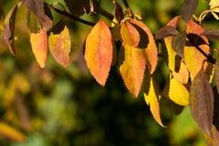 Предпосылка желтых листьев осени Стоковые Изображения