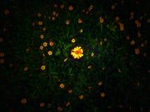 Предпосылка желтых цветков взгляда сверху темная ая-зелен стоковая фотография