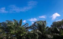 1 предпосылка заволакивает пасмурное небо стоковое фото