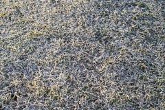 Предпосылка замороженной травы покрытая мята листьев hoar травы заморозка Стоковая Фотография