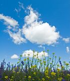 Предпосылка зацветая цветков Стоковая Фотография RF