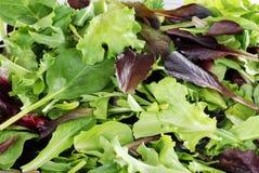 предпосылка зеленеет смешанный салат стоковая фотография