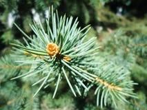 Предпосылка зеленого дерева листвы мягкая стоковые изображения rf