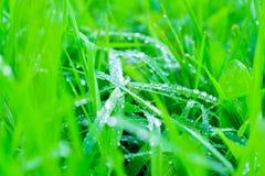 Предпосылка зеленой свежей травы с росой в утре Стоковые Фото
