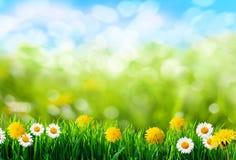Предпосылка зеленой травы и цветков Стоковые Фото