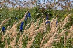 Предпосылка зеленой травы с голубым flowe Стоковые Изображения RF