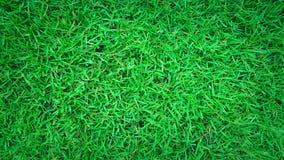 Предпосылка зеленой травы, текстура природы стоковая фотография