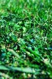 Предпосылка зеленой травы текстурированная Поле травы лета, horizont Стоковое Изображение