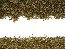Предпосылка зеленой фасоли или фасоли mung стоковое фото rf