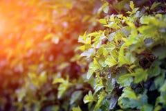 Предпосылка зеленых листьев Стоковые Фотографии RF