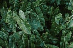 Предпосылка зеленых лист с росой Стоковое Изображение RF