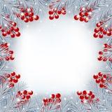 Предпосылка зимы с границей ветвей и ягод ели Стоковые Фото