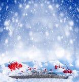 Предпосылка зимы с rowanberry стоковые фото