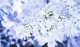 Предпосылка зимы Стоковое фото RF