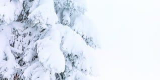Предпосылка знамени зимы при сосна покрытая сильным снегопадом Стоковые Фотографии RF