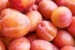 Предпосылка зрелых и сочных слив оранжевого красного цвета Стоковое Изображение RF