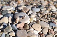 Предпосылка камешков пляжа моря Стоковое Фото