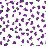 Предпосылка картины виноградин безшовная Стоковое Фото