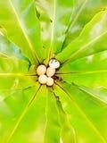 Предпосылка картины листьев стоковые изображения