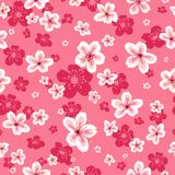 Предпосылка картины обоев вишневых цветов безшовная Стоковое Фото