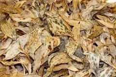 Предпосылка клала из высушенных листьев желтого цвета и коричневого цвета лилии o Стоковая Фотография RF