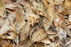 Предпосылка клала из высушенных листьев желтого цвета и коричневого цвета лилии o Стоковые Фото