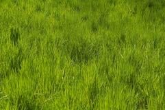 Предпосылка ковра травы Стоковое Фото