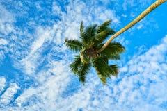 Предпосылка кокосовой пальмы & неба, Сейшельские островы Стоковое Фото
