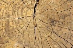 Предпосылка кольца дерева цвета желтого коричневого цвета Стоковые Фотографии RF