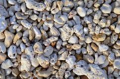 Предпосылка коралла Стоковое Изображение RF