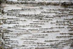 Предпосылка коры дерева белой березы с линией картинами Стоковая Фотография