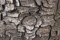 Предпосылка коры дерева стоковое фото