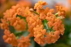 Предпосылка красивой весны тематическая стоковые изображения