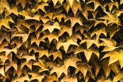 Предпосылка красивых зеленых листьев Конец-вверх Природа backhander стоковое изображение rf