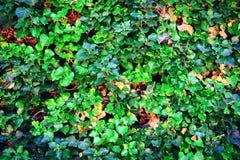 Предпосылка красивых зеленых листьев Конец-вверх Природа backhander стоковые изображения