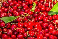 Предпосылка красной зрелой сладостной вишни, конец-вверх Стоковые Изображения