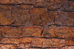 Предпосылка крупного плана текстуры коры дерева Брауна, дерево стоковое изображение rf