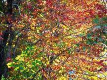 Предпосылка ландшафта ветвей деревьев осени стоковые фото