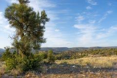 Предпосылка ландшафта пустыни Аризоны стоковое изображение rf
