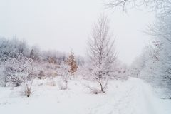 предпосылка легкая редактирует природу изображения для того чтобы vector зима Стоковое Изображение